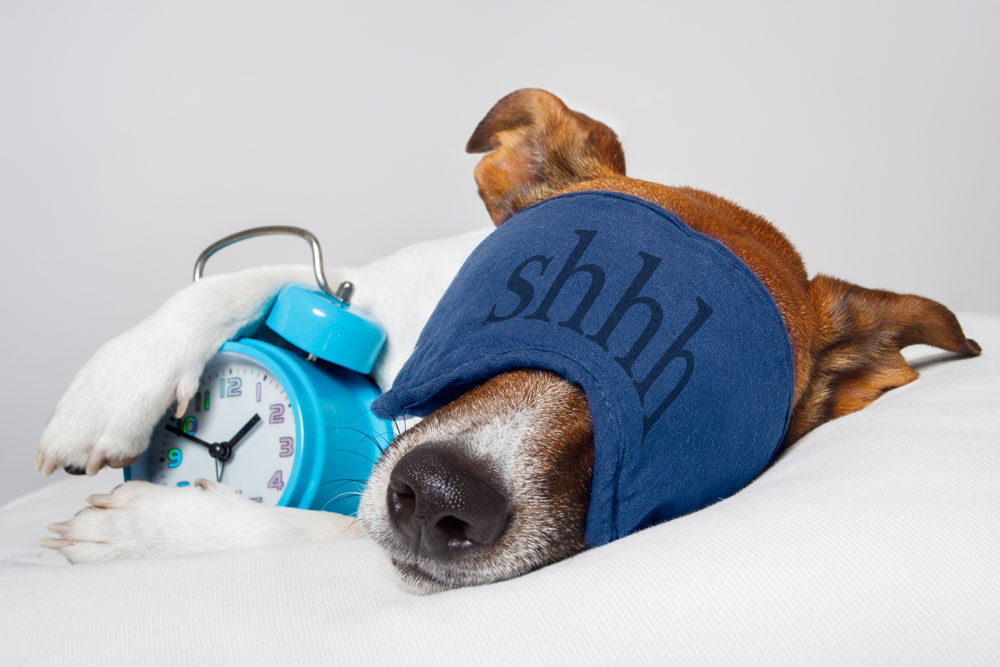Dog Sleeping With Alarm Clock